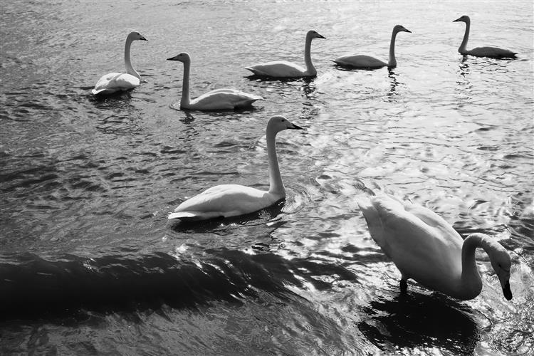 swan, 2017 - Chaokun Wang