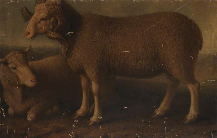 Merino Ram and Ewe - William Shiels