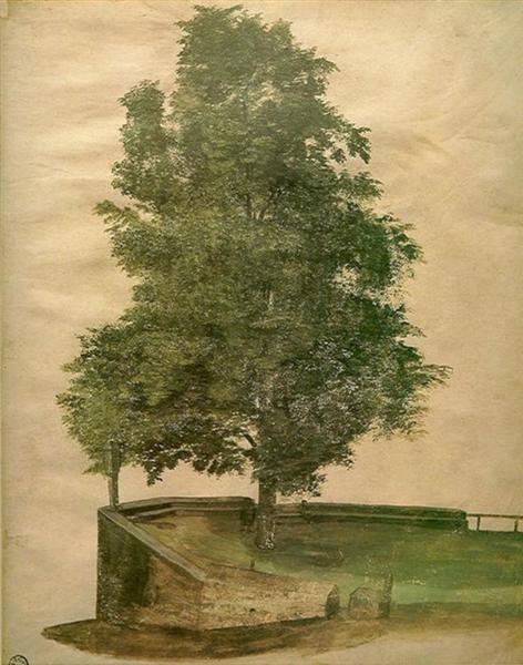 Linden Tree on a Bastion, 1494 - Albrecht Durer