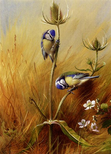 Bluetits On A Teasel, 1922 - Archibald Thorburn