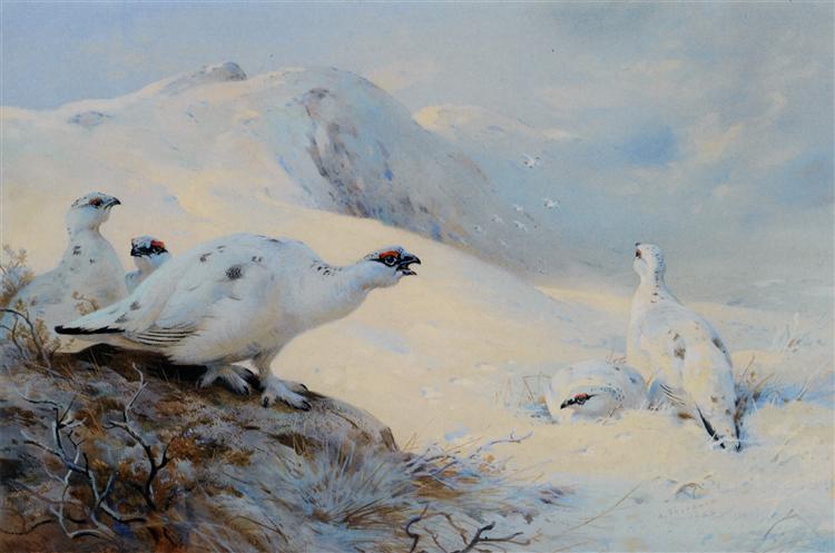 Ptarmigan Calling in the Snow, 1926 - Archibald Thorburn