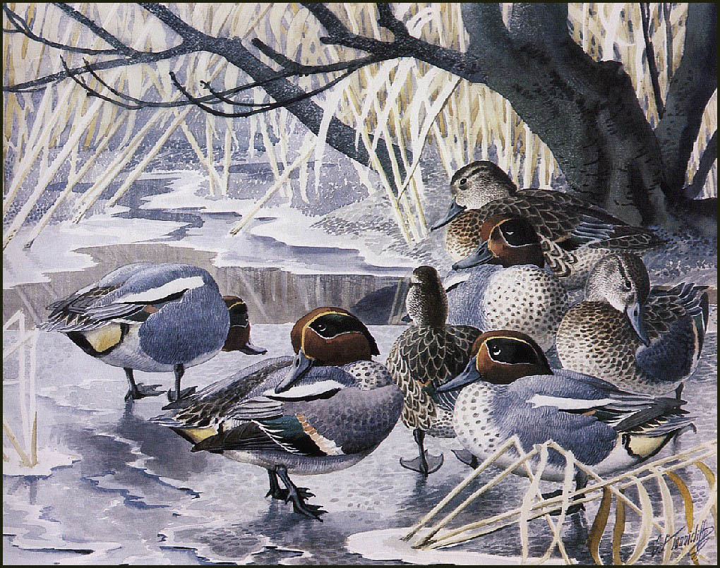 http://uploads6.wikiart.org/images/charles-tunnicliffe/teal(1).jpg