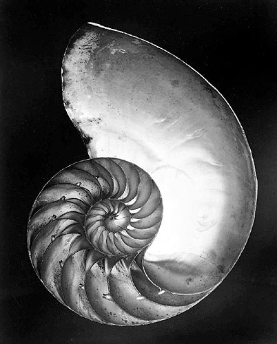 Shell, 1927 - Edward Weston