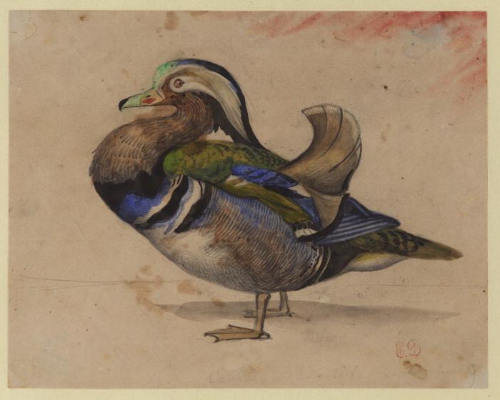 A Mandarin drake - Eugene Delacroix