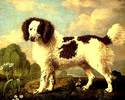 Brown and White Norfolk or Water Spaniel, 1778 - George Stubbs