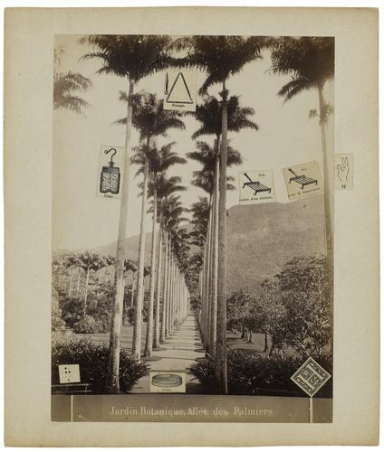 Jardin botanique, allée des palmiers, 1970 - Gherasim Luca