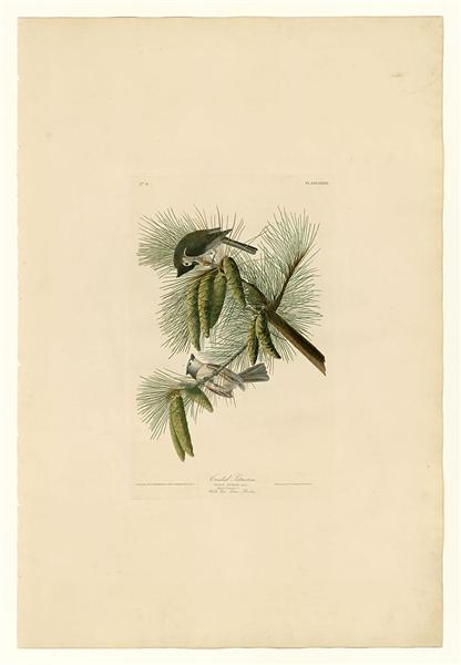 Plate 39. Crested Titmouse - John James Audubon
