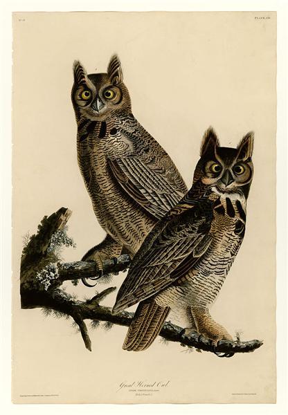 Plate 61. Great Horned Owl - John James Audubon