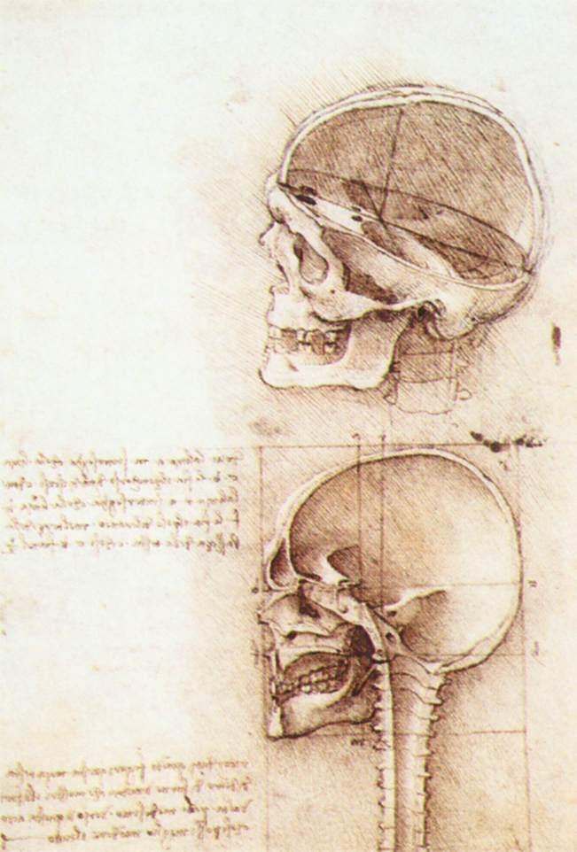 Studies of human skull, 1489