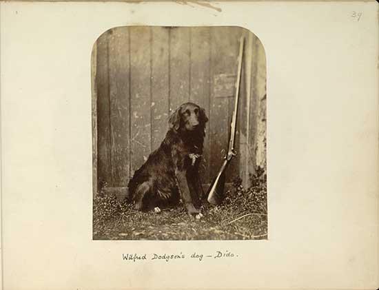 Wilfred Dodgson's dog Dido, 1857 - Lewis Carroll