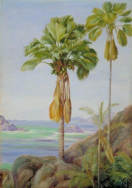 Male and Female Trees of the Coco de Mer in Praslin, 1883 - Marianne North