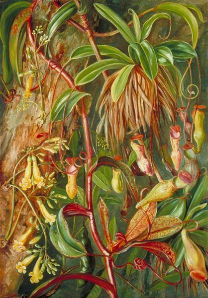 Seychelles Pitcher Plant and Bilimb Marron, 1883 - Marianne North