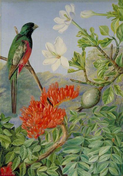 Two Flowering Shrubs of Natal and a Trogon, 1882 - Marianne North