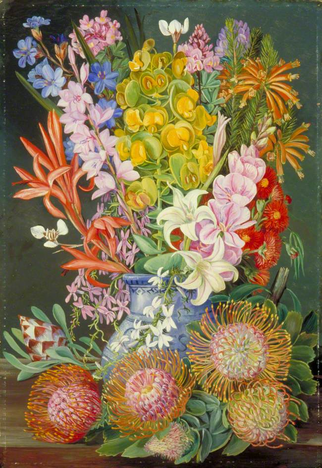 Ceres South Africa  city photos : wild flowers of ceres south africa 1882