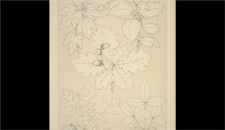 Leaves and Flowers from Nature Ornament no. 5. Leaves of the Vine, Hollyoak, Turkey Oak and Laburnum, full size - Owen Jones