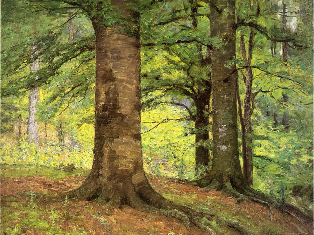 Uses For Beech Wood ~ Beech trees t c steele wikiart