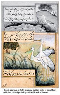 Crane - Ustad Mansur